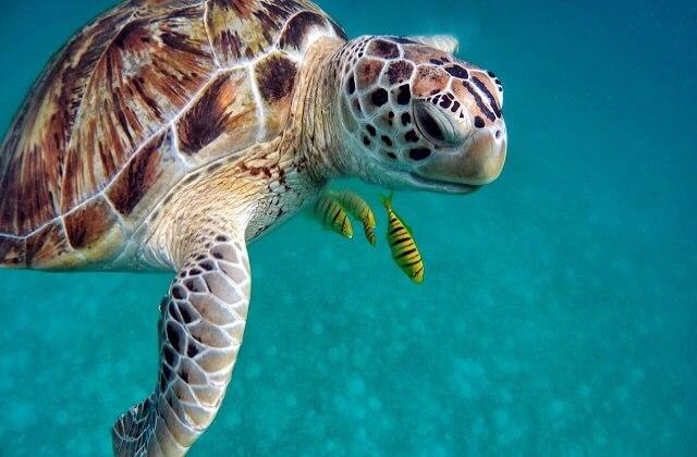 actionkamera maldiverna tips