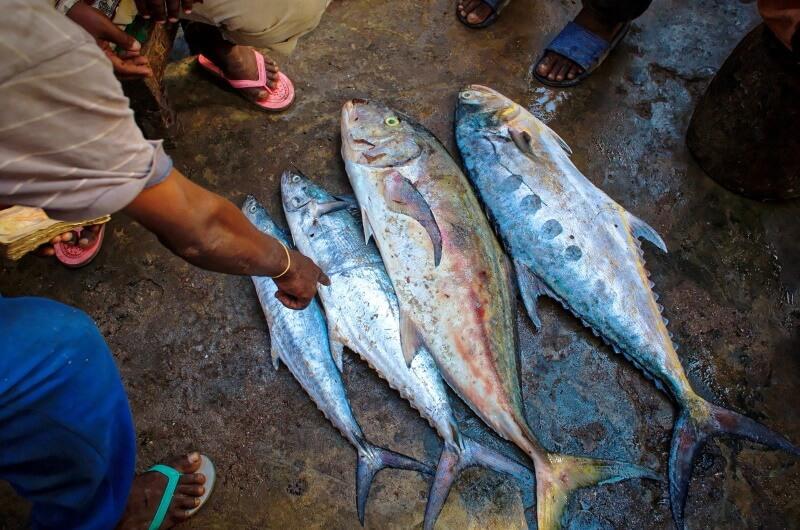 malé fiskmarknad maldiverna