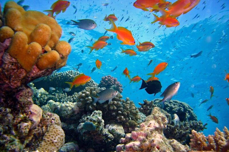 att göra på maldiverna - snorkla