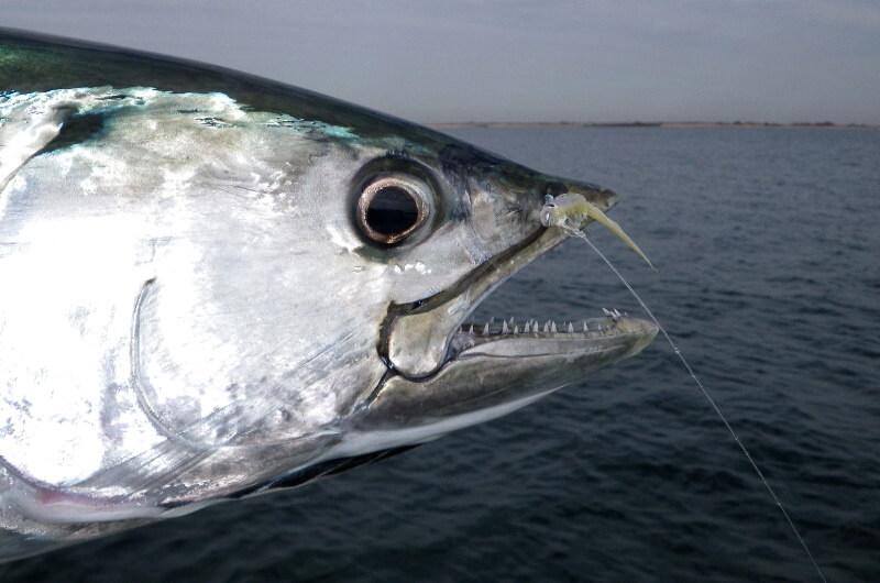 bästa fisket maldiverna