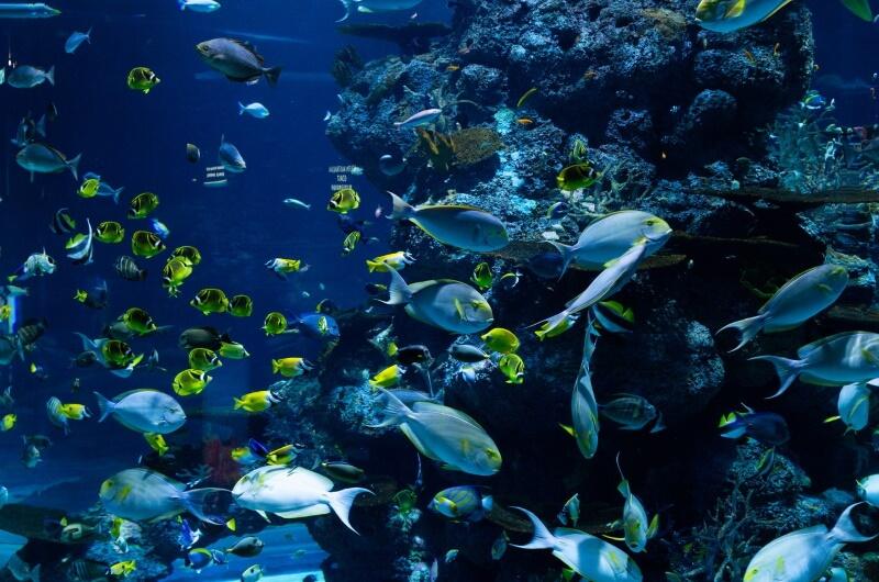 djurlivet på maldiverna - fiskar