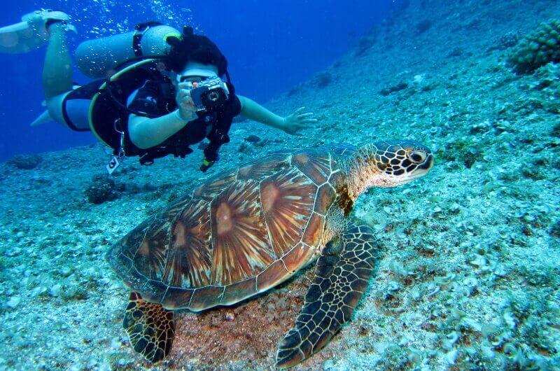 djurlivet på maldiverna - sköldpaddor